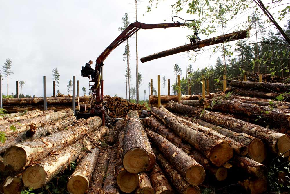 Лесозаготовительная техника в Центральном регионе