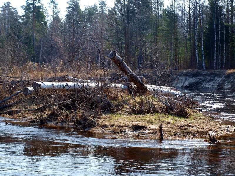 Лесозаготовительная техника в Поволжье
